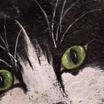 Il mio gatto Briciola - particolare -