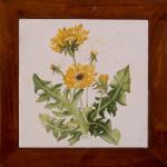 Tarasacco - maiolica - cm. 20x20
